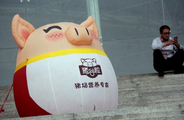 可爱的小猪头像